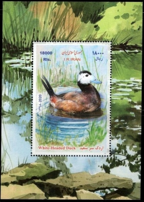 Scott New Issue 2020-06, White-Head Duck, a single Souvenir Sheet